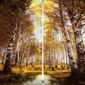 Curtains Birch Trees Forest Print Backdrop 8921